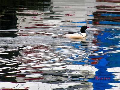 Photograph - Wood Duck by Sadie Reneau