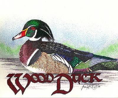 Wood Duck Drawing - Wood Duck by Scarlett Royal