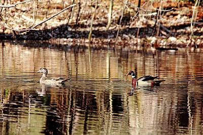 Photograph - Wood Ducks Enjoying The Pond by Debbie Oppermann