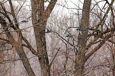 Photograph - Wood Ducks In Flight by Debbie Oppermann