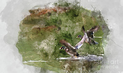 Digital Art - Wood Ducks In Flight by Kathy Kelly
