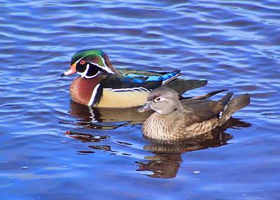 Photograph - Wood Ducks by John Burk