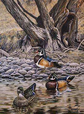 Waterfowl Painting - Wood Ducks by Melisa Weigle