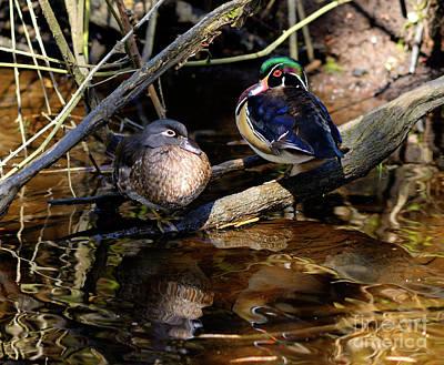 Photograph - Wood Ducks by Terry Elniski