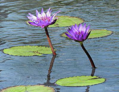 Photograph - Wood Enhanced Water Lilies by Rosalie Scanlon