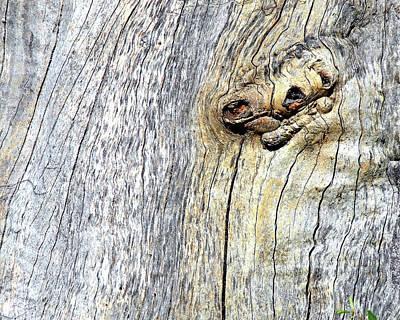 Photograph - Wood Eyes  by Lynda Lehmann