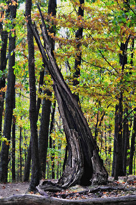 Radnor Lake Photograph - Wood Flame by Ally White
