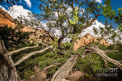 Photograph - Wood Frame At Zion by Jim DeLillo