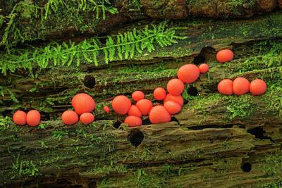 Wood Fungus Art Print