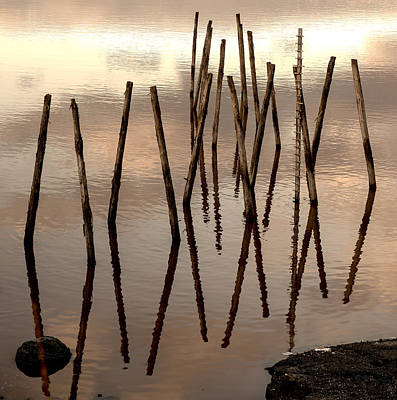 Photograph - Wood In The Water. by Radoslav Nedelchev