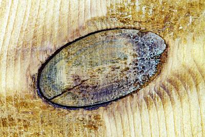 Photograph - Wood Knot Macro by Bob Slitzan