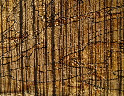 Photograph - Wood by Michael Canning