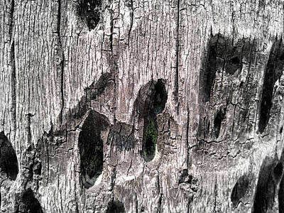 Photograph - Wood No. 6-1 by Sandy Taylor