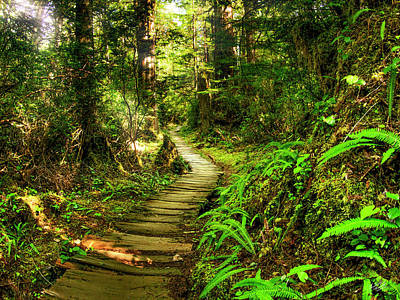 Photograph - Wood Path In Forest by Leland D Howard