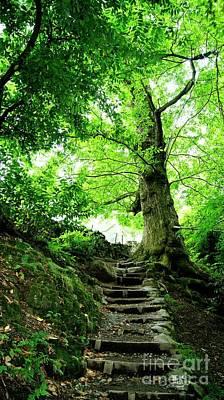 Wood Path Original by LDS Dya