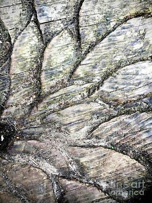 Photograph - Wood Pattern by Tom Gowanlock