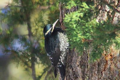 Wood Pecker Photograph - Wood Pecker by Jeff Swan