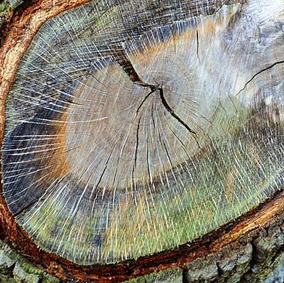 Aged Wood Digital Art - Wood Rings by Stephen Anderson