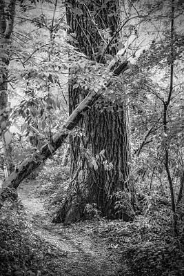 Photograph - Wood by Roberto Pagani