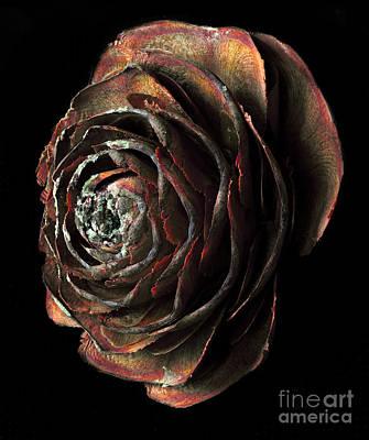 Wood Rose Art Print by Russ Brown