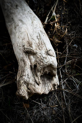 Photograph - Wood Spirit 2 by Cathy Mahnke