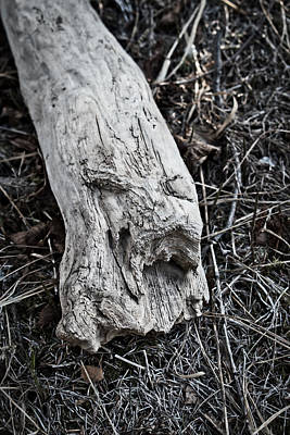 Photograph - Wood Spirit by Cathy Mahnke