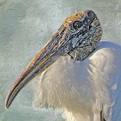 Bird Photograph - Wood Stork 2 by HH Photography of Florida