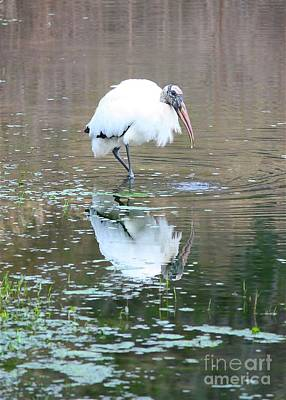 Reflection On Pond Photograph - Wood Stork Beauty by Carol Groenen