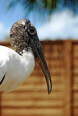 Photograph - Wood Stork by Debbie Oppermann