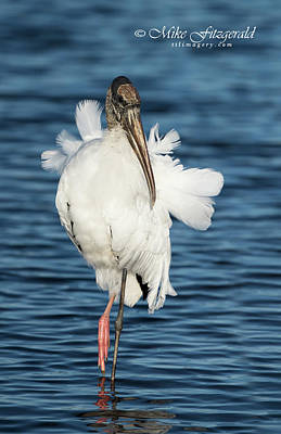 Photograph - Wood Stork by Mike Fitzgerald