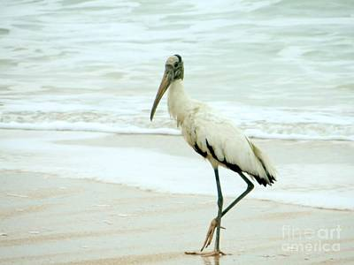 Photograph - Wood Stork On The Beach by Tim Townsend