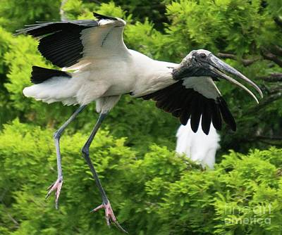 Photograph - Wood Stork by Vincent Billotto