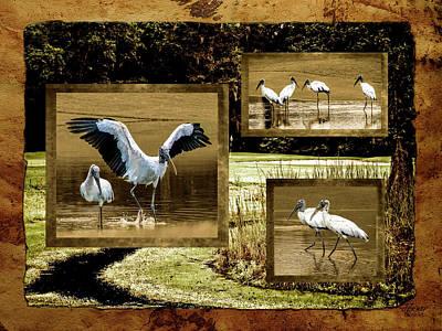 Photograph - Wood Storks Of Oak Grove Island by Jim Ziemer