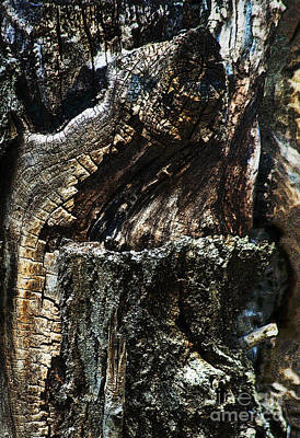 Photograph - Wood Textures by Fred Lassmann