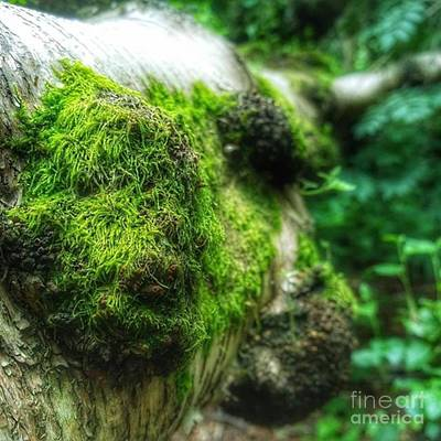 Forest Wall Art - Photograph - #wood #tree #forest #nature by Isabella Shores