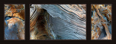 Photograph - Wood Triptych by Leland D Howard