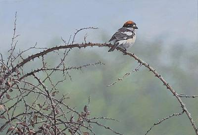 Painting - Woodchat Shrike by Alan M Hunt