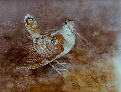 Woodcock Painting - Woodcock by Attila Meszlenyi
