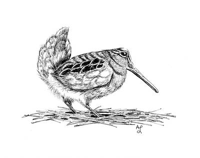 Woodcock Drawing - Woodcock Dance by Angie Lilienthal