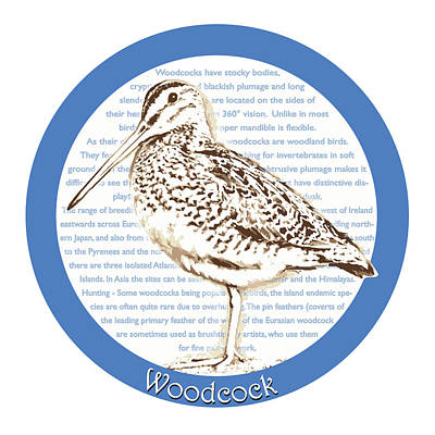 Woodcock Print by Greg Joens