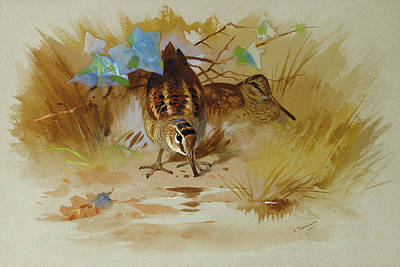 Woodcock Wall Art - Mixed Media - Woodcock In A Sandy Hollow By Thorburn by Archibald Thorburn