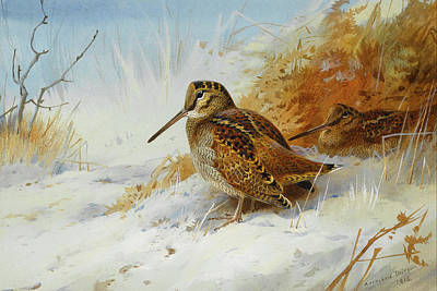Woodcock Wall Art - Mixed Media - Woodcock In Winter By Thorburn by Archibald Thorburn