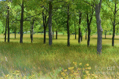 Photograph - Wooded Meadow by Deb Halloran