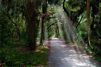 Canopy Photograph - Wooded Road by J Darrell Hutto