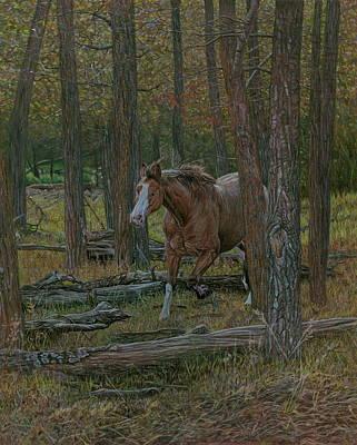Ponies Drawing - Wooded Run by Laura Klassen