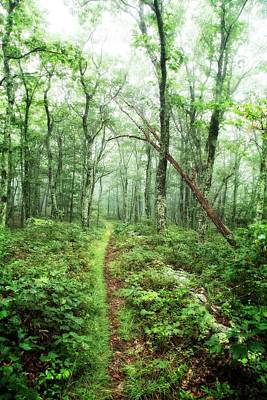 Photograph - Wooded Trail by Alan Raasch