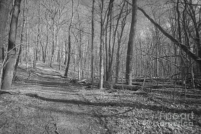 Wooded Trail Infrared Art Print by Alan Look