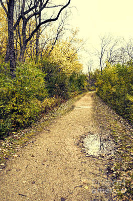 Photograph - Wooded Trail  by Jill Battaglia