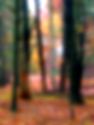 Painting - Wooded Wonderland by Paul Sachtleben