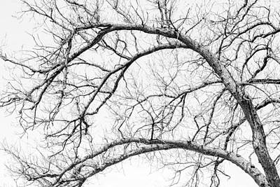 Black And White Images Photograph - Wooden Arteries by Az Jackson